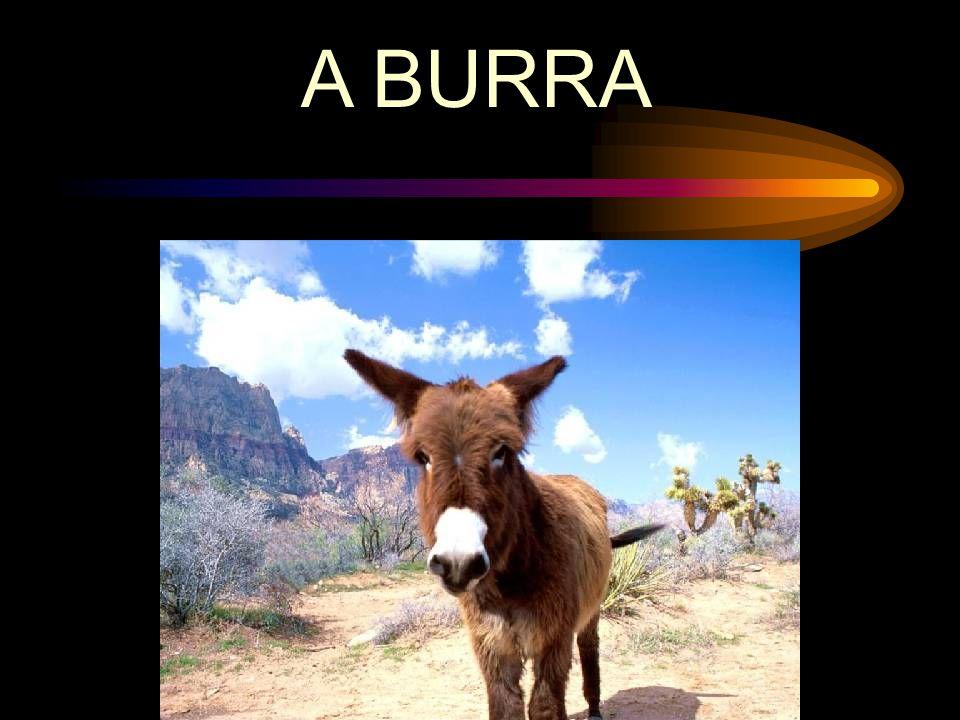 A BURRA
