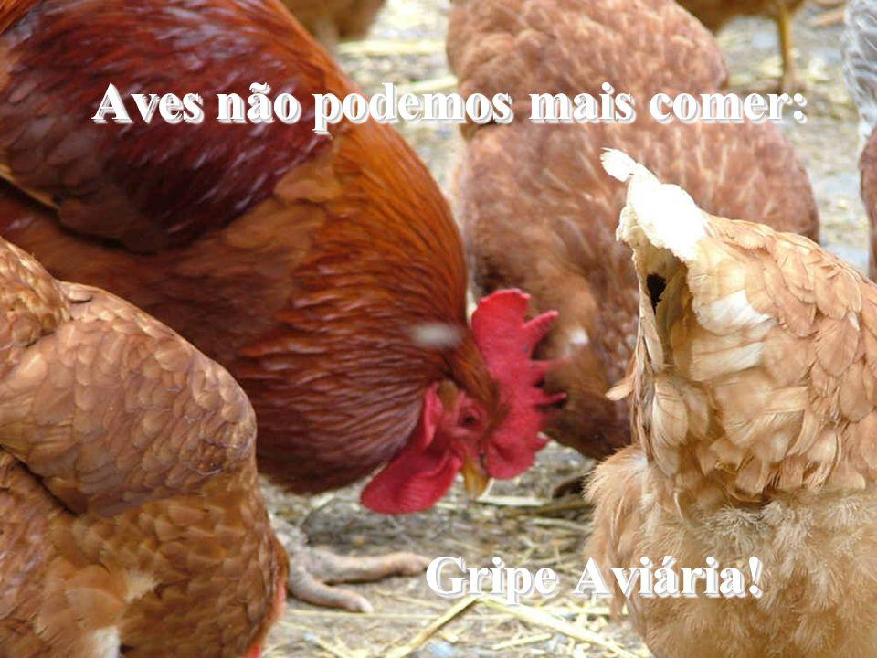 Aves não podemos mais comer: Gripe Aviária!