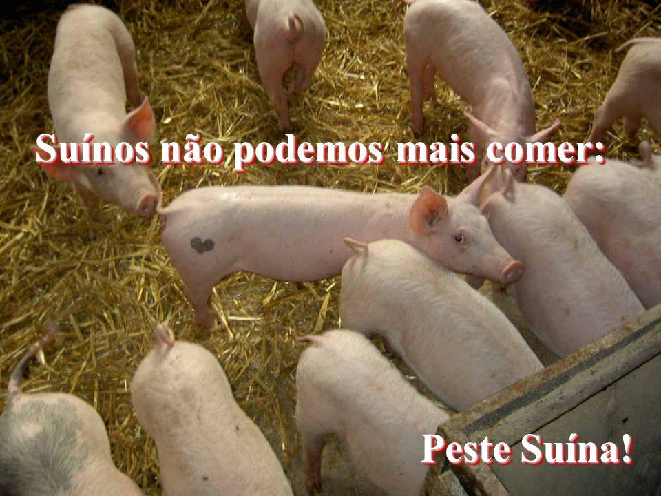 Suínos não podemos mais comer: Peste Suína!