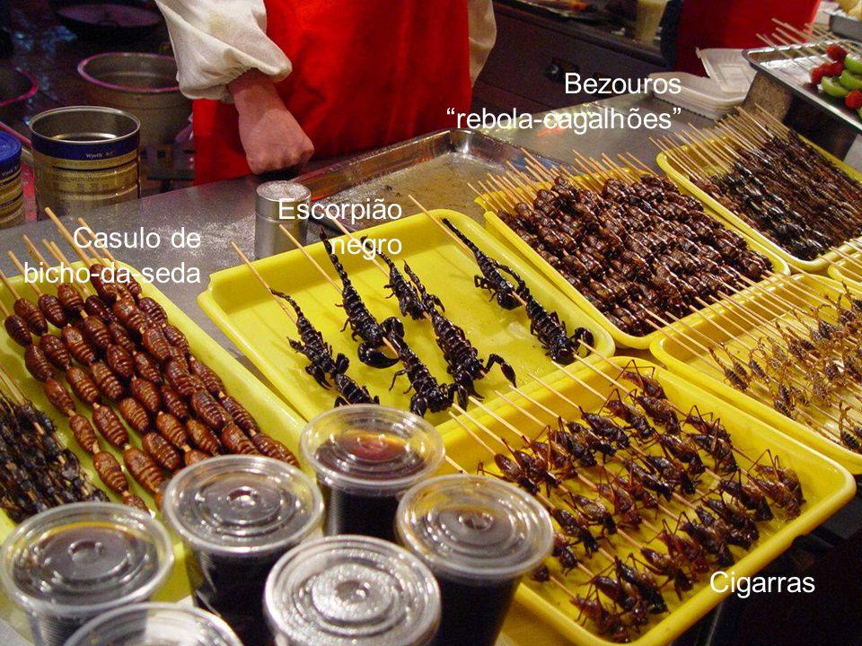 Escorpião negro Casulo de bicho-da-seda Cigarras Bezouros rebola-cagalhões