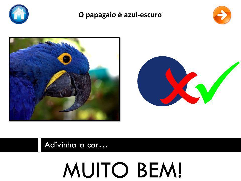 Adivinha a cor… MUITO BEM! O papagaio é azul-escuro