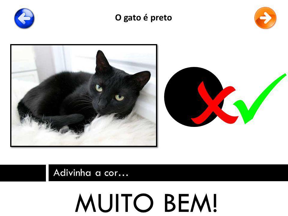 Adivinha a cor… MUITO BEM! O gato é preto