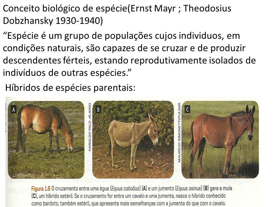 Conceito biológico de espécie(Ernst Mayr ; Theodosius Dobzhansky 1930-1940) Espécie é um grupo de populações cujos individuos, em condições naturais,
