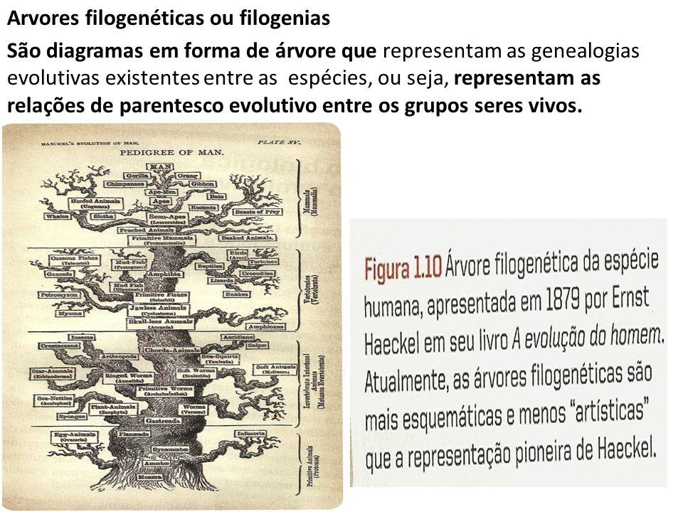 Arvores filogenéticas ou filogenias São diagramas em forma de árvore que representam as genealogias evolutivas existentes entre as espécies, ou seja,