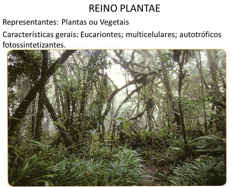 REINO PLANTAE Representantes: Plantas ou Vegetais Características gerais: Eucariontes; multicelulares; autotróficos fotossintetizantes.