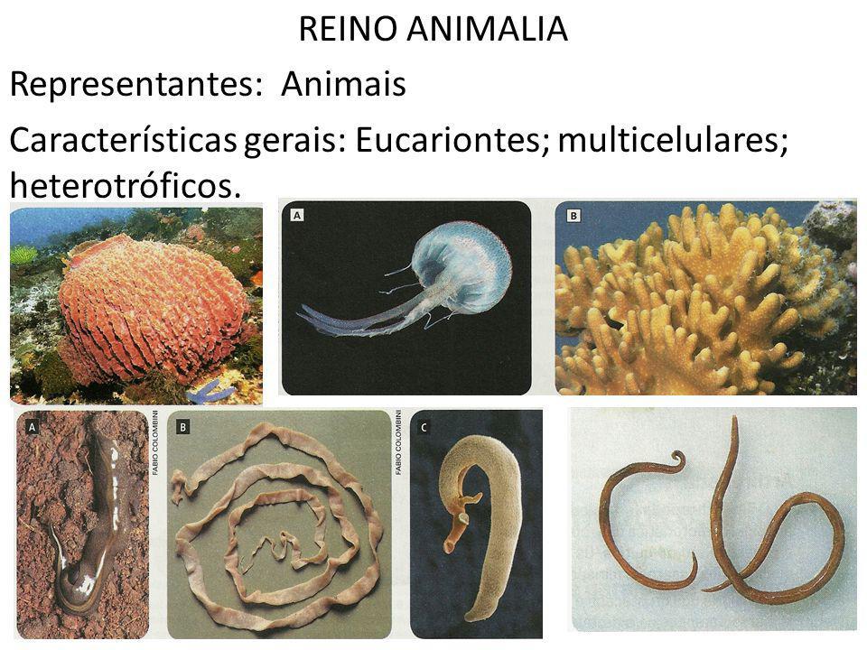 REINO ANIMALIA Representantes: Animais Características gerais: Eucariontes; multicelulares; heterotróficos.