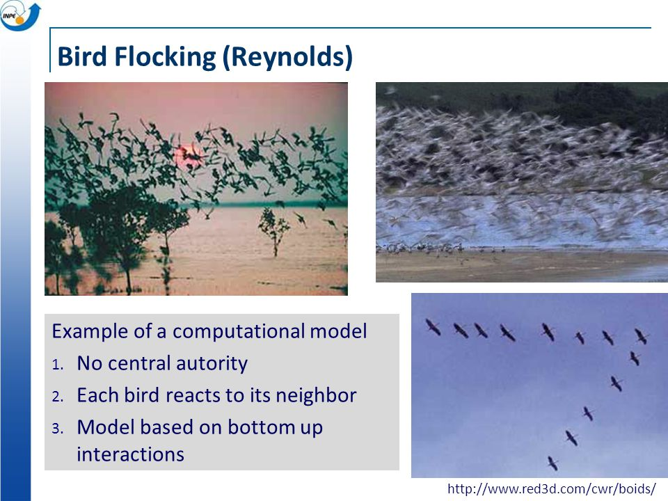 Bird Flocking (Reynolds) Example of a computational model 1.