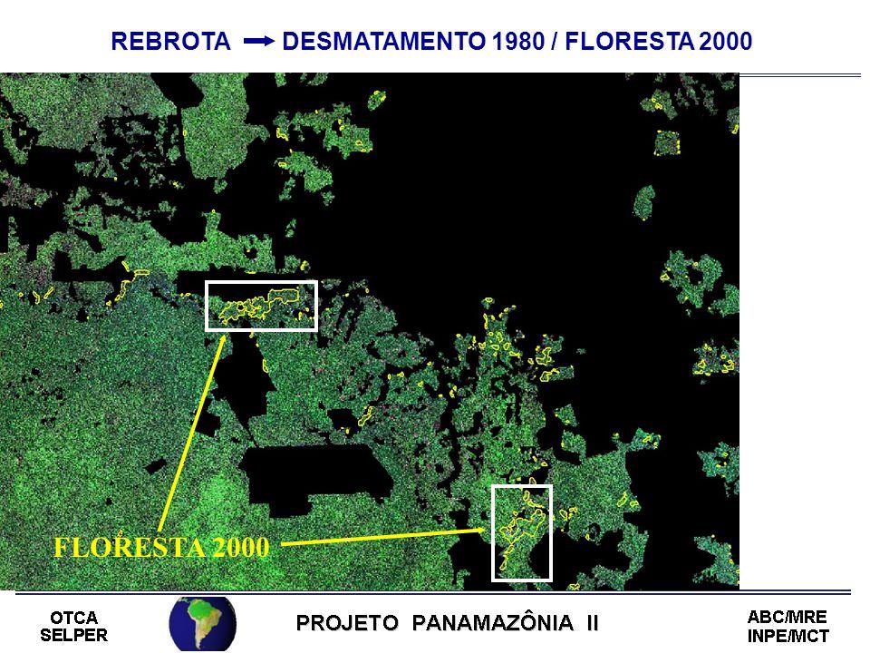 REBROTA DESMATAMENTO 1980 / FLORESTA 2000 FLORESTA 2000