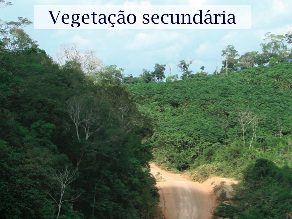 Vegetação secundária