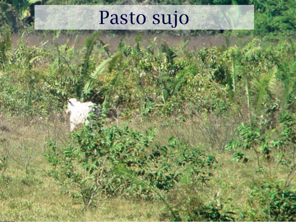 Pasto sujo