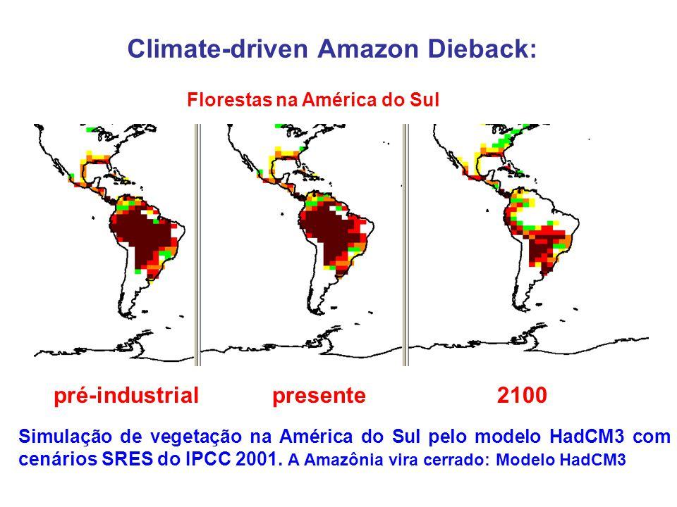 Climate-driven Amazon Dieback: Florestas na América do Sul pré-industrial presente 2100 Simulação de vegetação na América do Sul pelo modelo HadCM3 com cenários SRES do IPCC 2001.