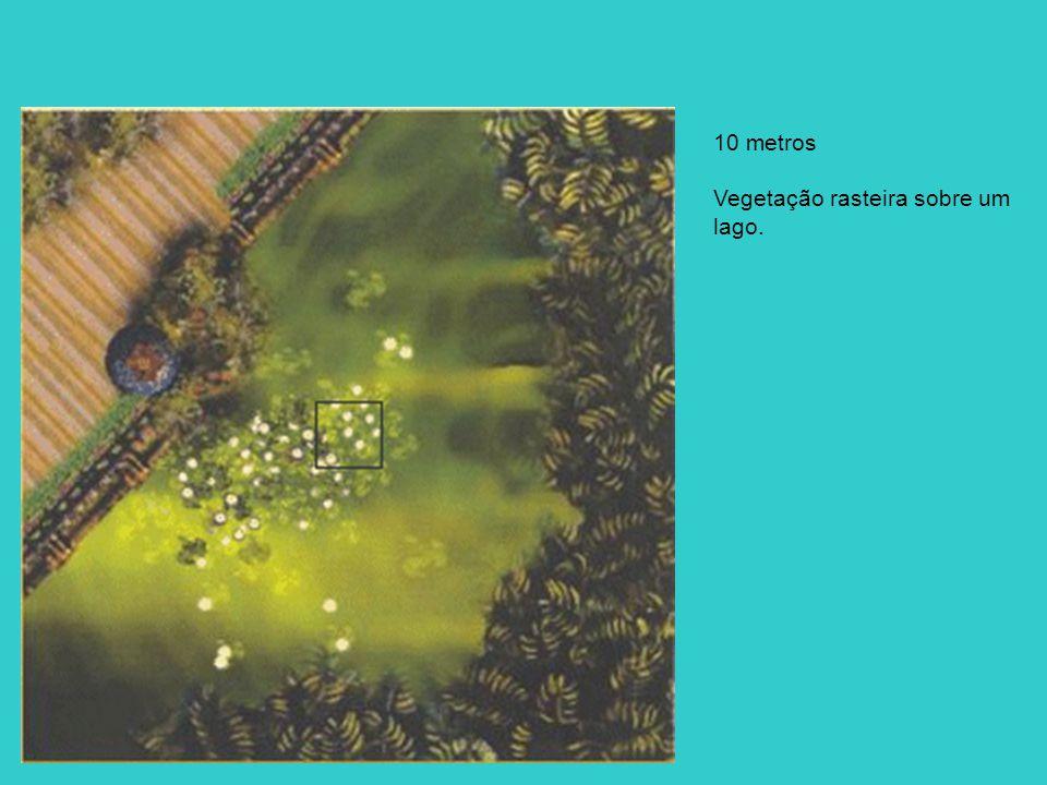10 metros Vegetação rasteira sobre um lago.