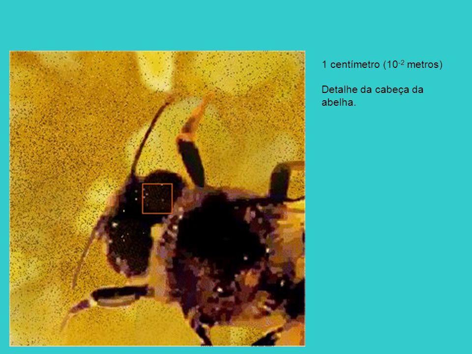 1 centímetro (10 -2 metros) Detalhe da cabeça da abelha.