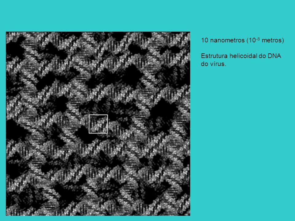 10 nanometros (10 -8 metros) Estrutura helicoidal do DNA do vírus.