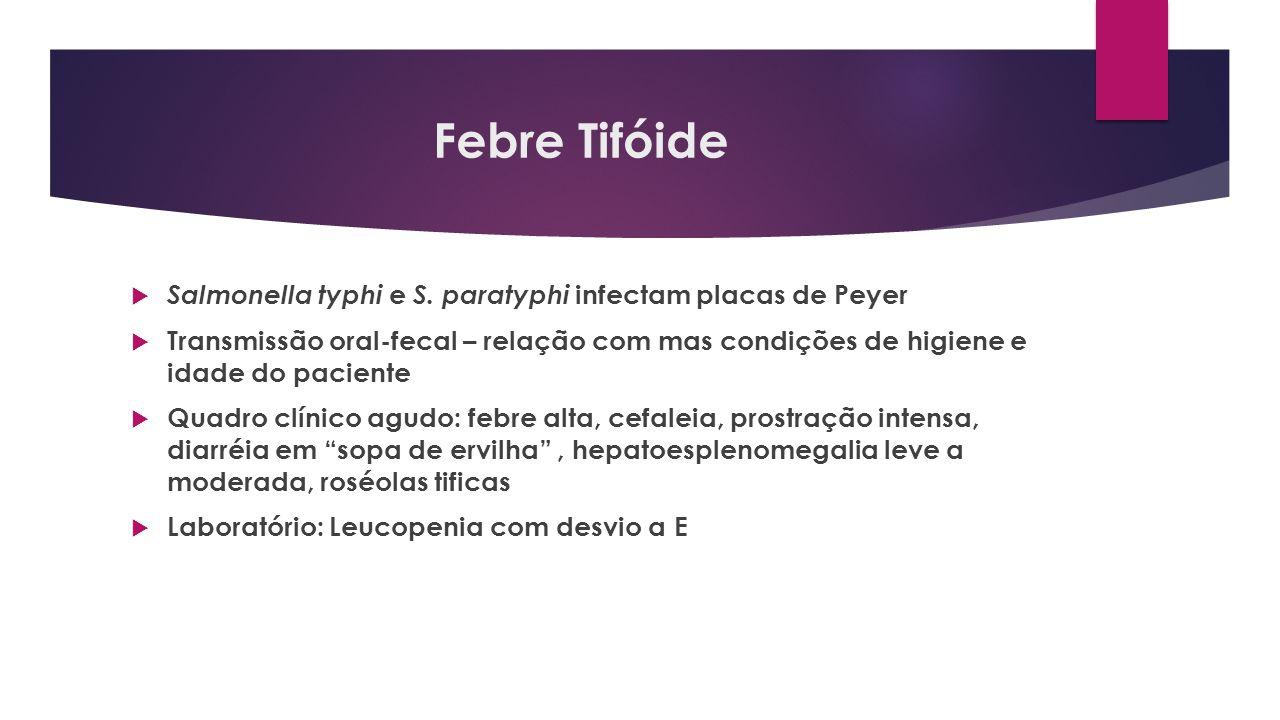 Febre Tifóide Salmonella typhi e S. paratyphi infectam placas de Peyer Transmissão oral-fecal – relação com mas condições de higiene e idade do pacien