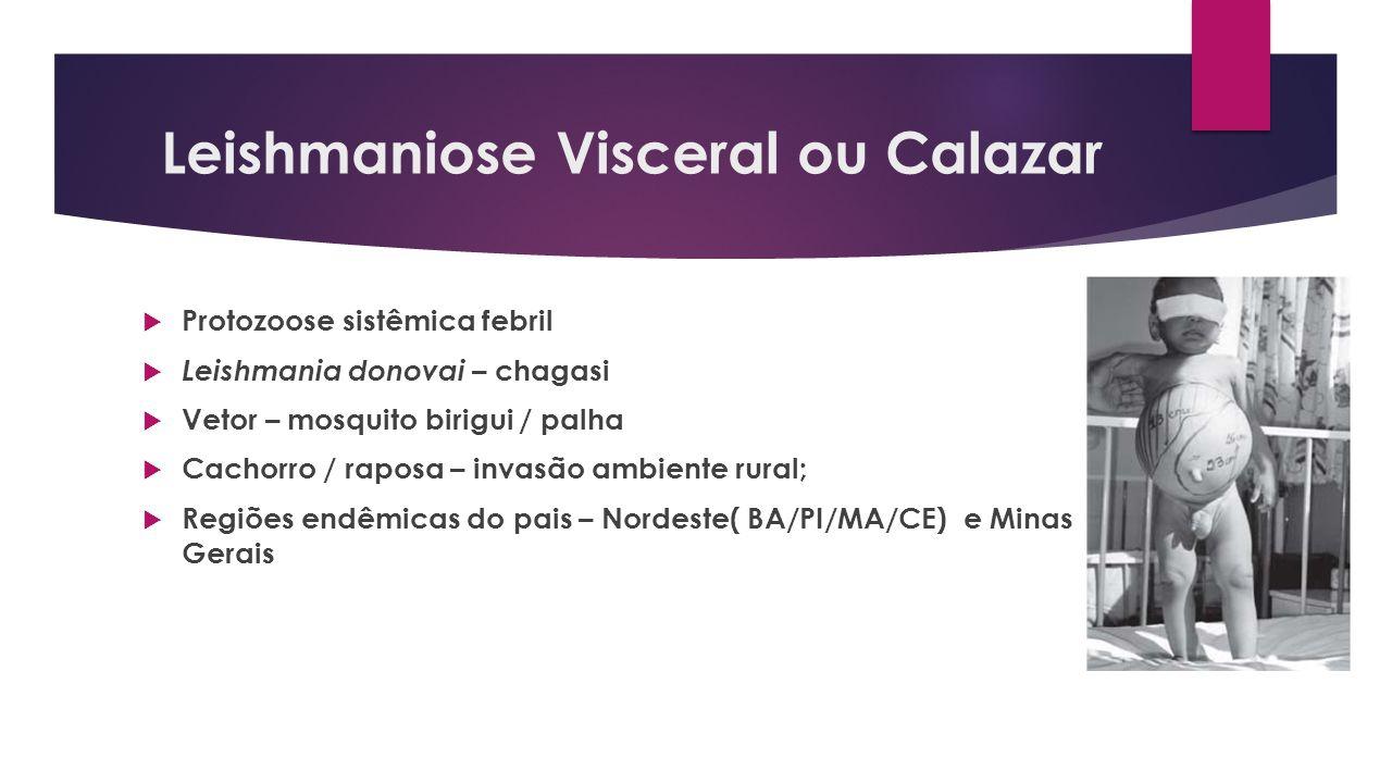 Leishmaniose Visceral ou Calazar Protozoose sistêmica febril Leishmania donovai – chagasi Vetor – mosquito birigui / palha Cachorro / raposa – invasão