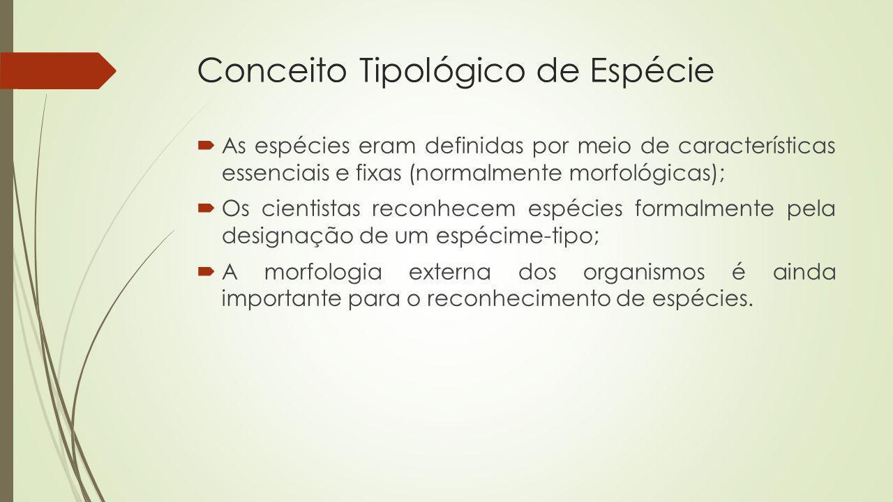 Conceito Tipológico de Espécie As espécies eram definidas por meio de características essenciais e fixas (normalmente morfológicas); Os cientistas rec
