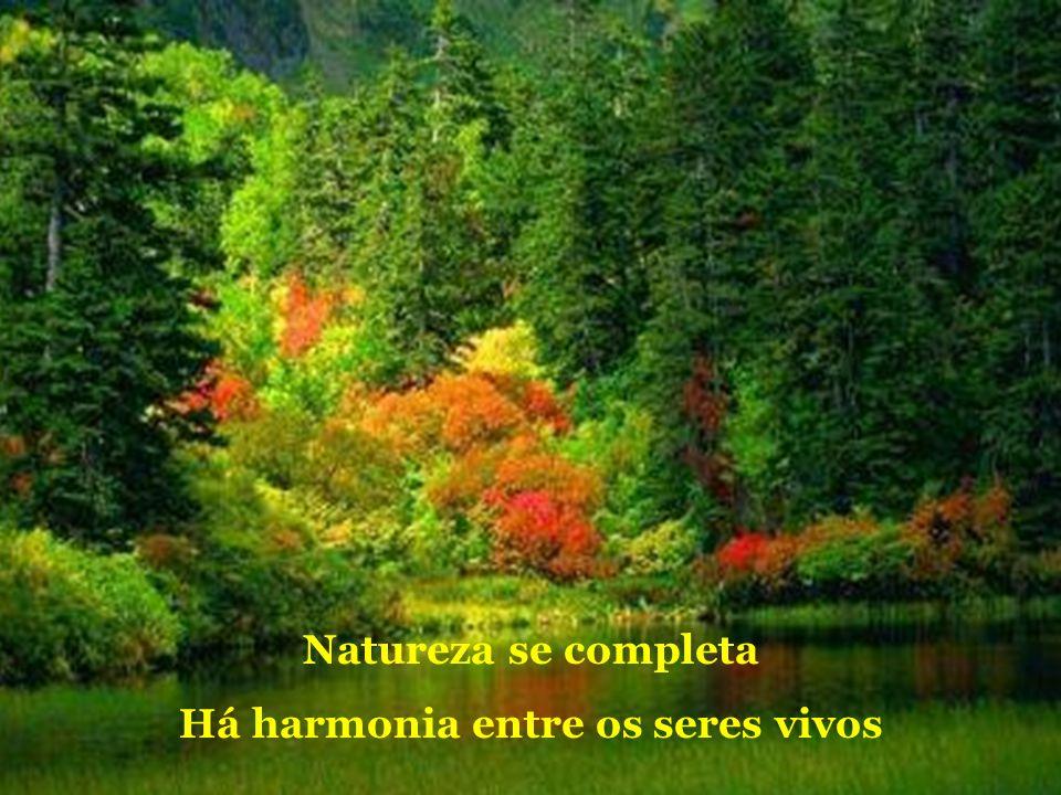 Natureza se completa Há harmonia entre os seres vivos