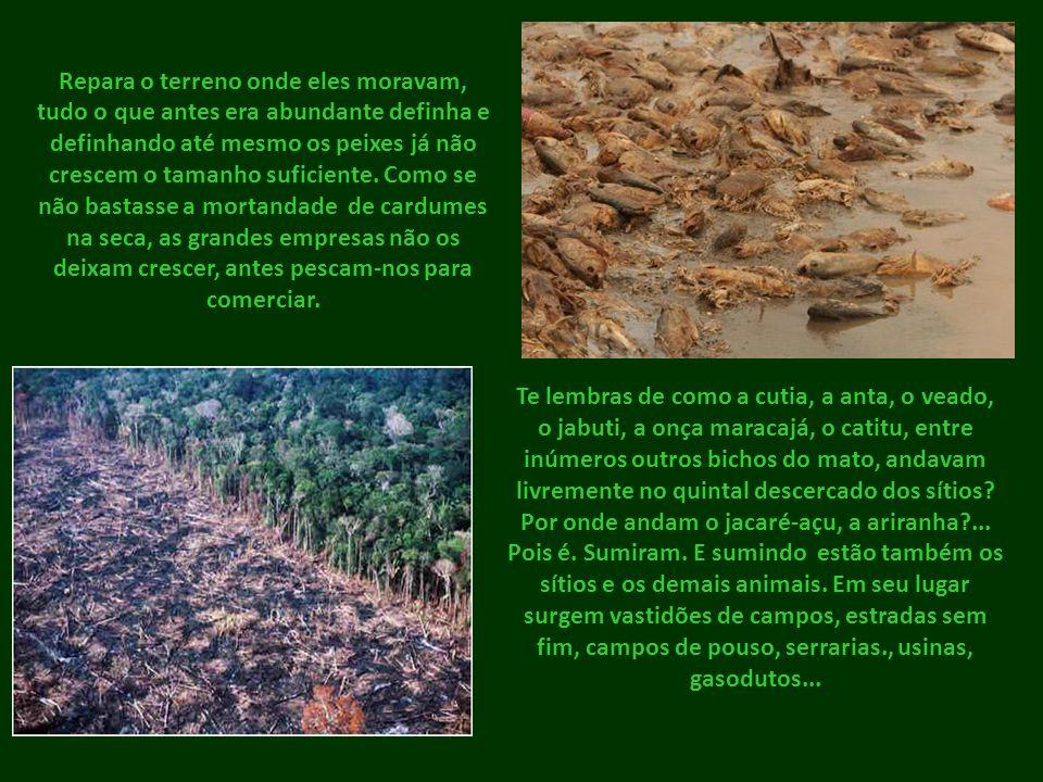 Por isso os animais silvestres embrenham- se mais e mais no âmago da floresta à procura de sossego...