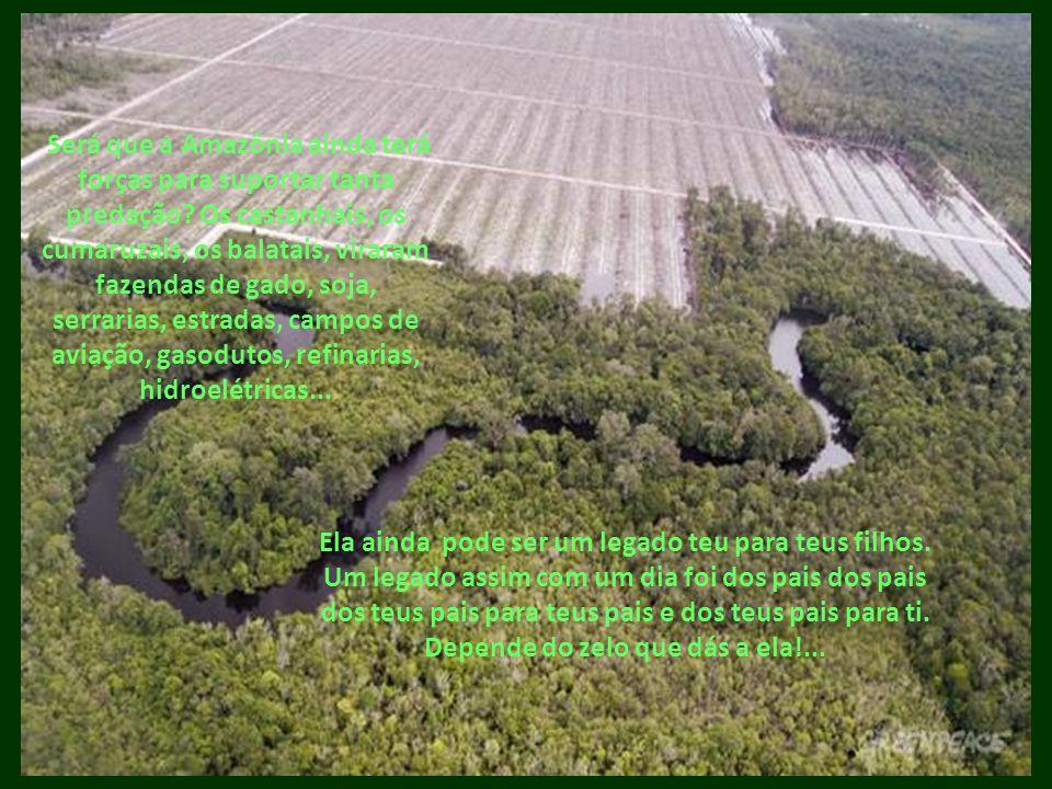 Será que a Amazônia ainda terá forças para suportar tanta predação? Os castanhais, os cumaruzais, os balatais, viraram fazendas de gado, soja, serrari