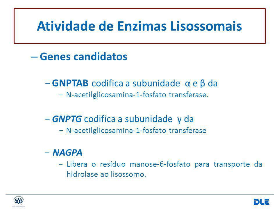 – Genes candidatos GNPTAB codifica a subunidade α e β da N-acetilglicosamina-1-fosfato transferase. GNPTG codifica a subunidade γ da N-acetilglicosami
