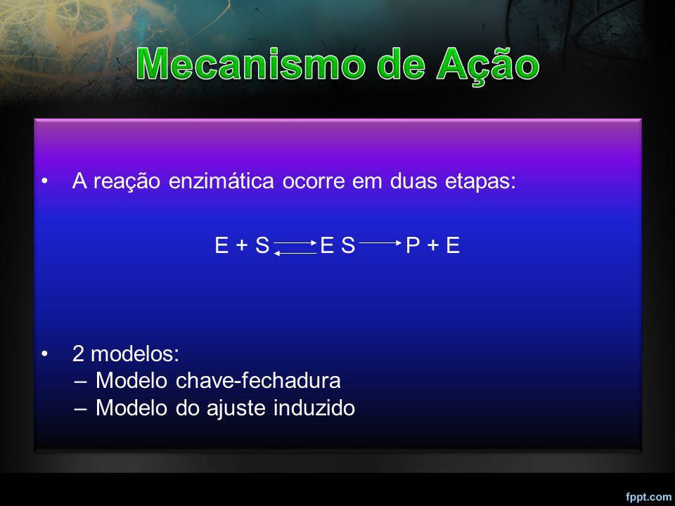 A reação enzimática ocorre em duas etapas: E + S E S P + E 2 modelos: –Modelo chave-fechadura –Modelo do ajuste induzido A reação enzimática ocorre em