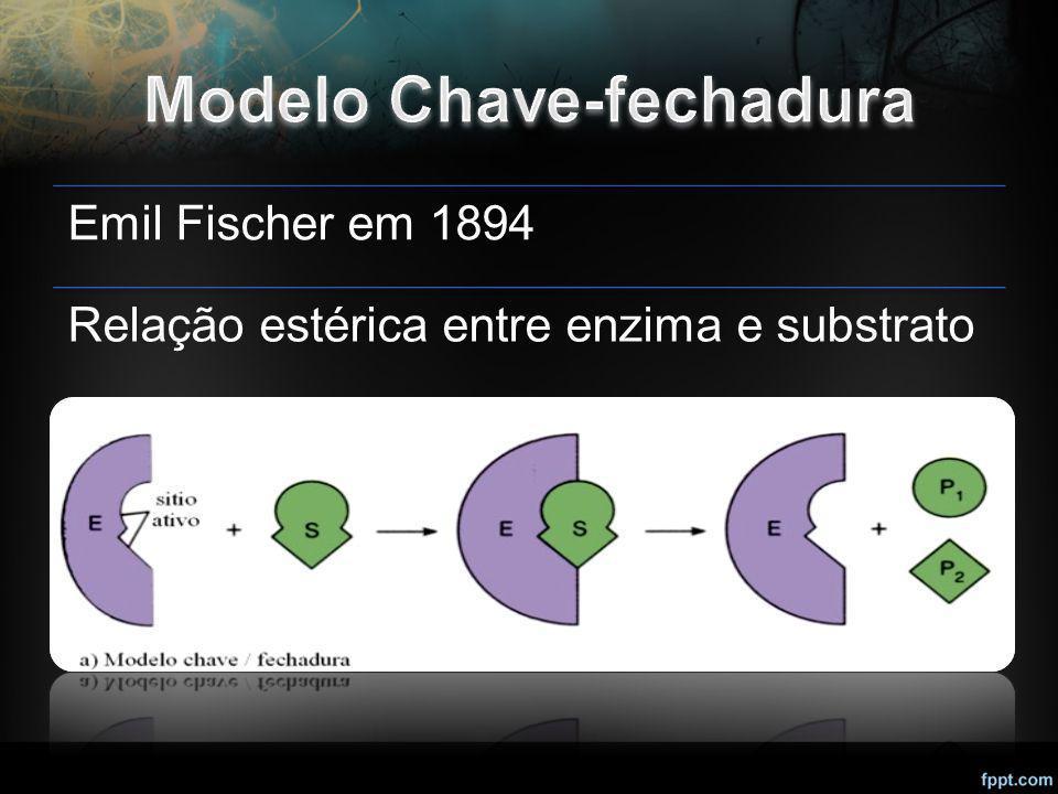 Emil Fischer em 1894 Relação estérica entre enzima e substrato