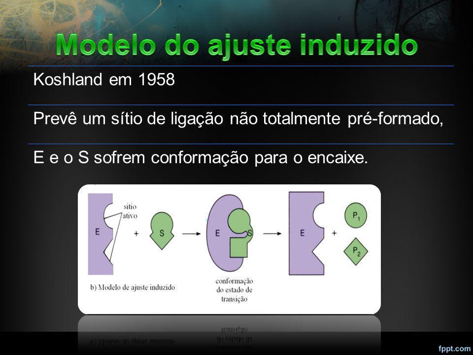 Koshland em 1958 Prevê um sítio de ligação não totalmente pré-formado, E e o S sofrem conformação para o encaixe.