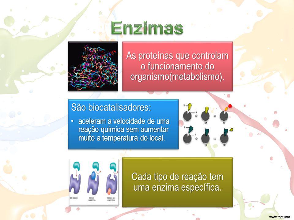 As proteínas que controlam o funcionamento do organismo(metabolismo).