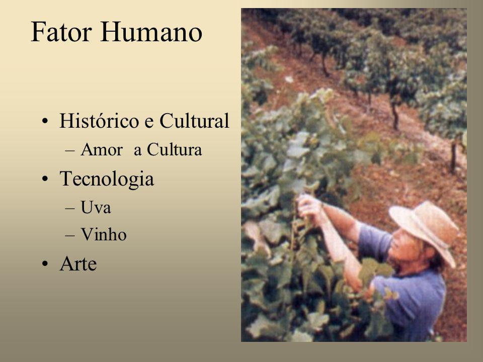 3o 3o 3o 3o Alicerce da Qualidade dos Vinhos Fator Humano