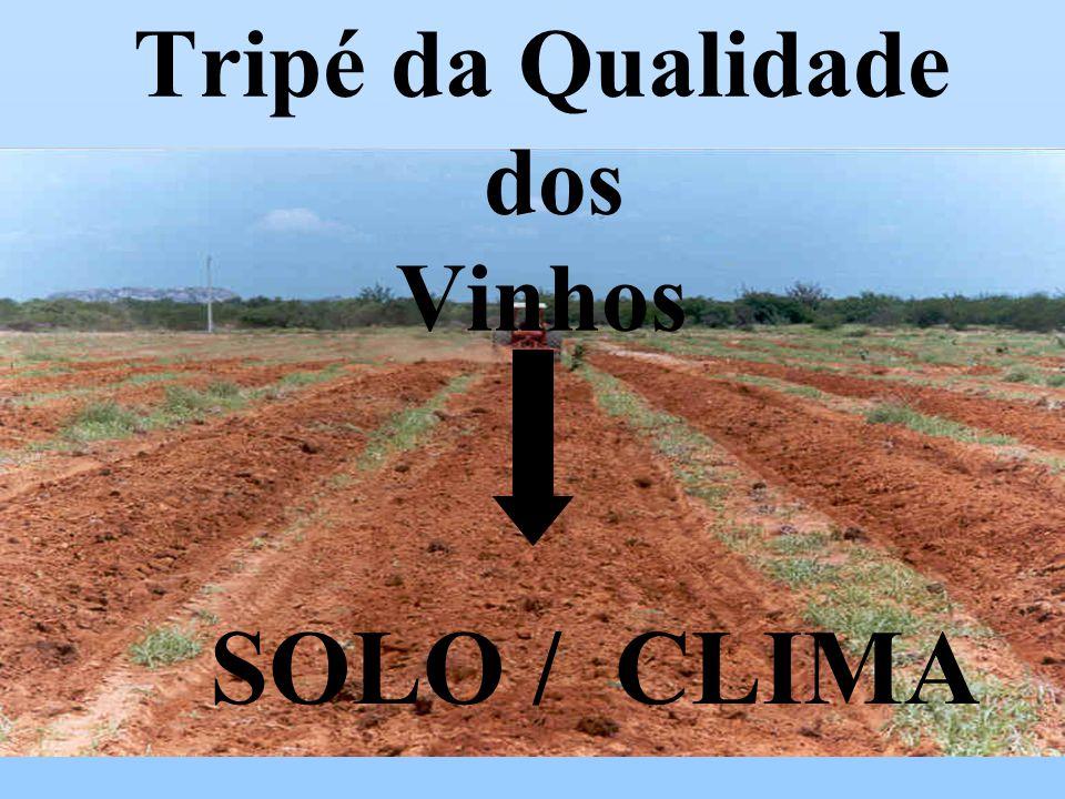 SOLO / CLIMA Tripé da Qualidade dos Vinhos