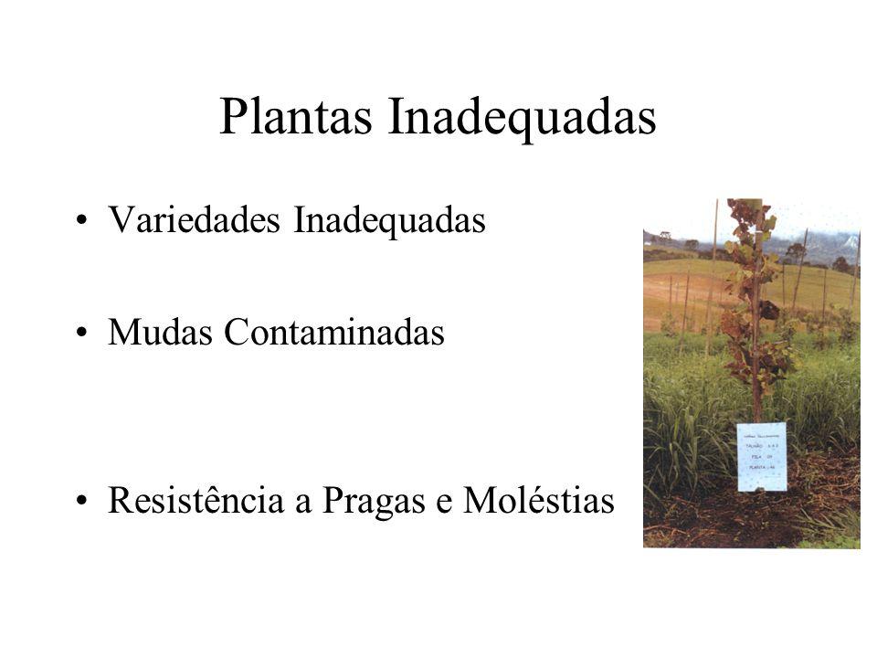 Plantas Inadequadas Variedades Inadequadas Mudas Contaminadas Resistência a Pragas e Moléstias