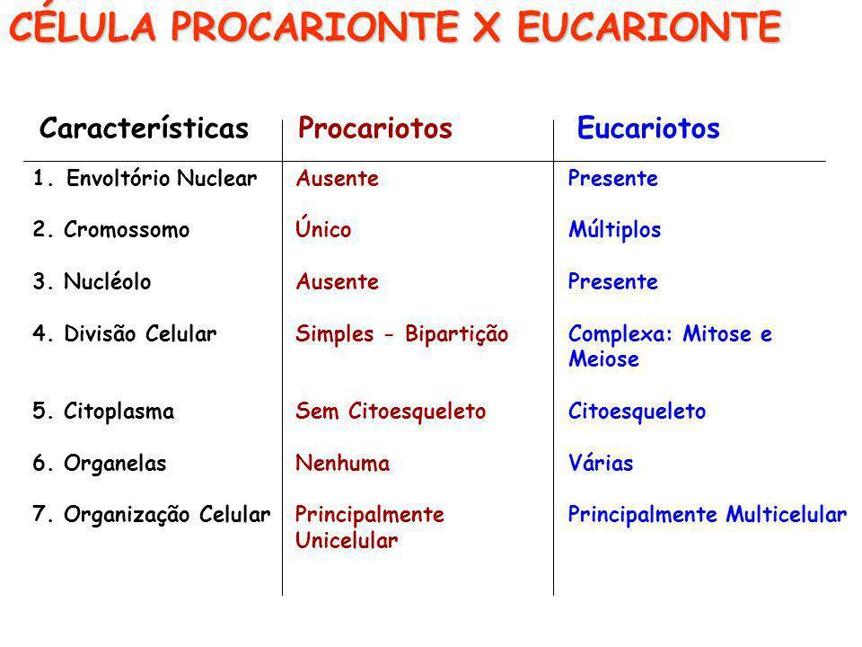 CÉLULA PROCARIONTE X EUCARIONTE Características Procariotos Eucariotos 1.Envoltório Nuclear 2. Cromossomo 3. Nucléolo 4. Divisão Celular 5. Citoplasma