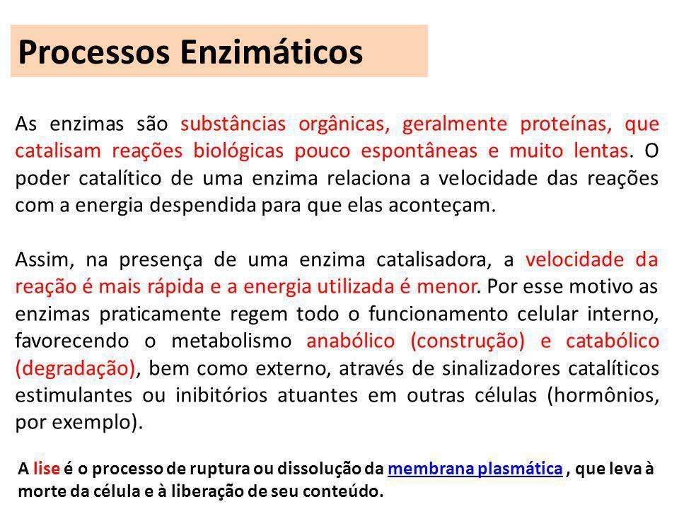 As enzimas são substâncias orgânicas, geralmente proteínas, que catalisam reações biológicas pouco espontâneas e muito lentas. O poder catalítico de u