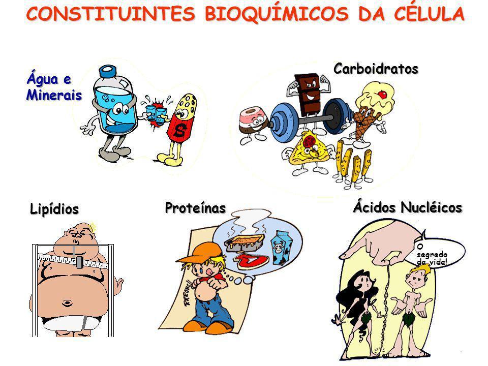 CONSTITUINTES BIOQUÍMICOS DA CÉLULA Água e Minerais Carboidratos Proteínas Lipídios Ácidos Nucléicos O segredo da vida!