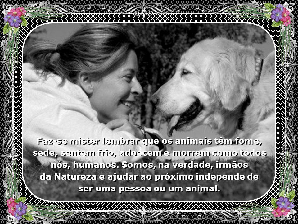 Ajuda também aos animais abandonados. São vítimas da insensatez humana que, quando mais não se interessam por esses belos irmãos, simplesmente, os aba