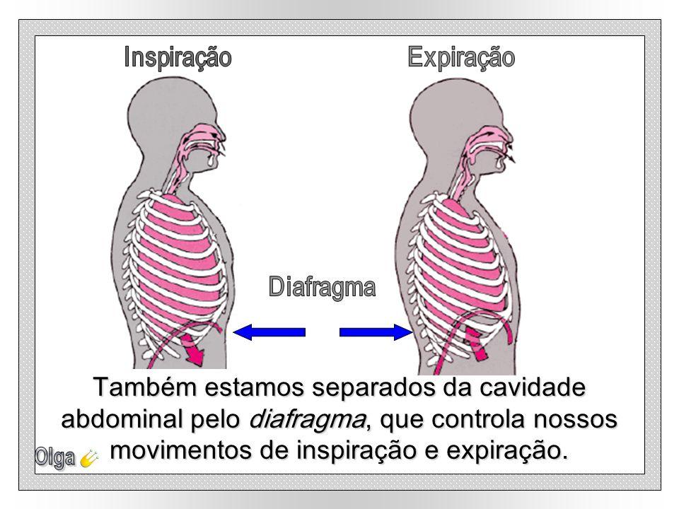 Também estamos separados da cavidade abdominal pelo diafragma, que controla nossos movimentos de inspiração e expiração.