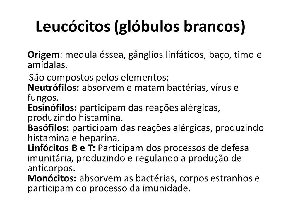 Leucócitos (glóbulos brancos) Origem: medula óssea, gânglios linfáticos, baço, timo e amídalas. São compostos pelos elementos: Neutrófilos: absorvem e