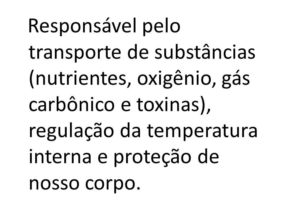 Responsável pelo transporte de substâncias (nutrientes, oxigênio, gás carbônico e toxinas), regulação da temperatura interna e proteção de nosso corpo