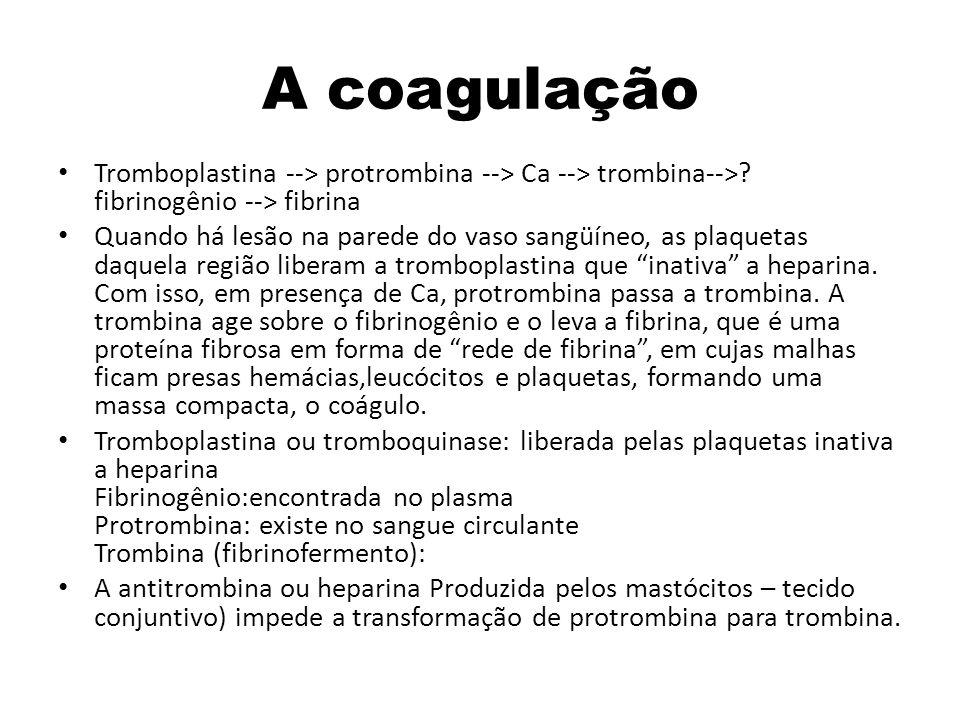 A coagulação Tromboplastina --> protrombina --> Ca --> trombina-->? fibrinogênio --> fibrina Quando há lesão na parede do vaso sangüíneo, as plaquetas