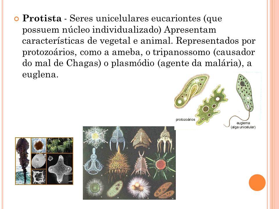 Protista - Seres unicelulares eucariontes (que possuem núcleo individualizado) Apresentam características de vegetal e animal.