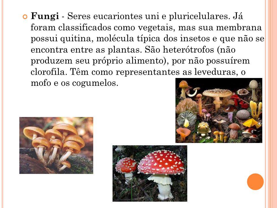 Fungi - Seres eucariontes uni e pluricelulares.
