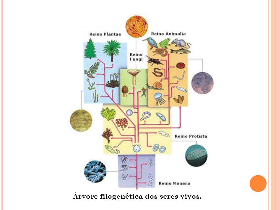 Árvore filogenética dos seres vivos.