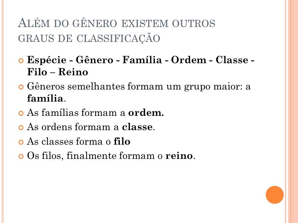 A LÉM DO GÊNERO EXISTEM OUTROS GRAUS DE CLASSIFICAÇÃO Espécie - Gênero - Família - Ordem - Classe - Filo – Reino Gêneros semelhantes formam um grupo maior: a família.