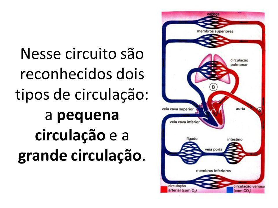 Nesse circuito são reconhecidos dois tipos de circulação: a pequena circulação e a grande circulação.