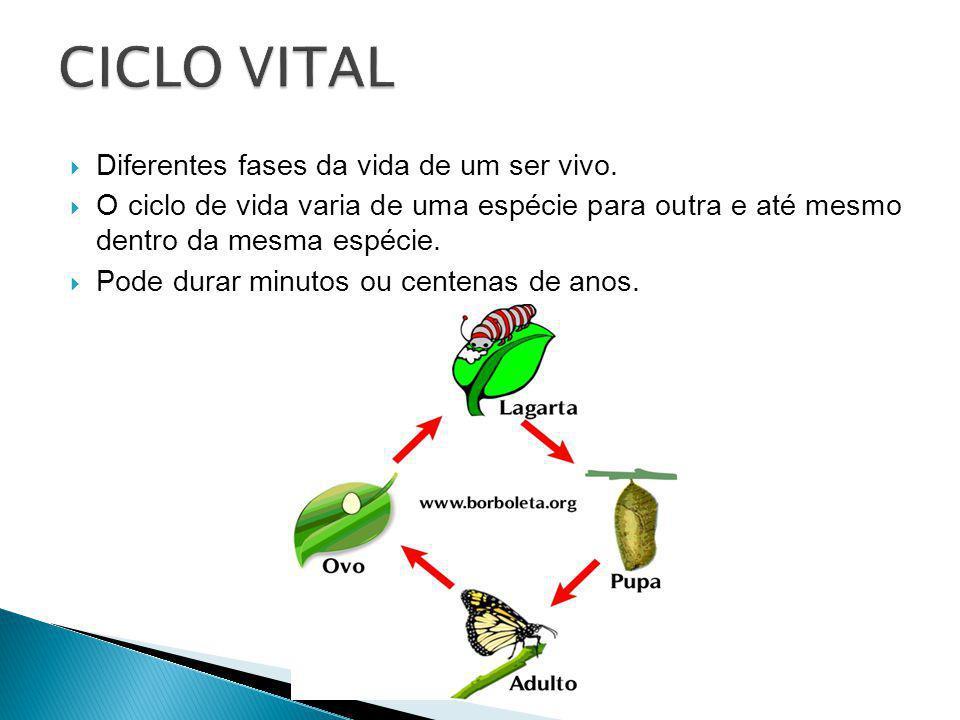 Diferentes fases da vida de um ser vivo. O ciclo de vida varia de uma espécie para outra e até mesmo dentro da mesma espécie. Pode durar minutos ou ce