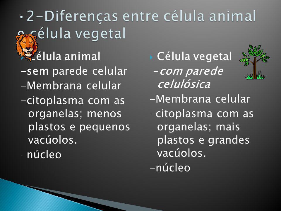 Célula animal -sem parede celular -Membrana celular -citoplasma com as organelas; menos plastos e pequenos vacúolos. -núcleo Célula vegetal -com pared