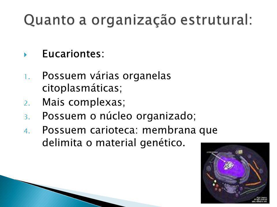 Eucariontes: 1. Possuem várias organelas citoplasmáticas; 2. Mais complexas; 3. Possuem o núcleo organizado; 4. Possuem carioteca: membrana que delimi