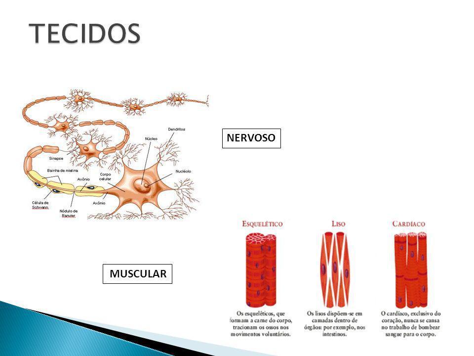 Ergatoplasma Carioteca Cromatina Nucléolo Mitocondria Complexo de Golgi Centríolo Menbrana Plasmática Ribossomo Lisossomo