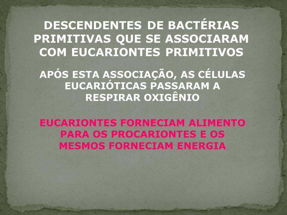 HIPÓTESE ENDOSSIMBIÓTICA OU SIMBIOGÊNICA MITOCÔNDRIAS - RESPIRAÇÃO CELULAR (EUCARIONTES) PLASTOS - FOTOSSÍNTESE (ALGAS E PLANTAS)